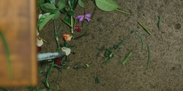 Moxom & Whitney Flower School